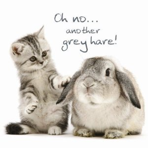 greyhare