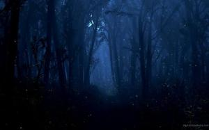 woods-at-night